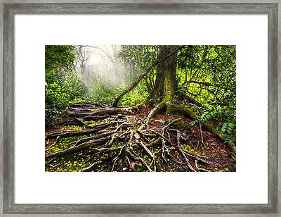 Magical Light On The Appalachian Trail Framed Print by Debra and Dave Vanderlaan