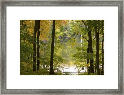 Magical Maplewood Framed Print