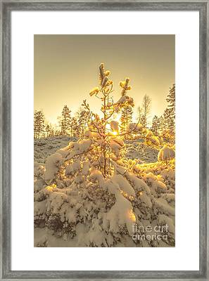 Magical Moments In The Middle Of January Framed Print