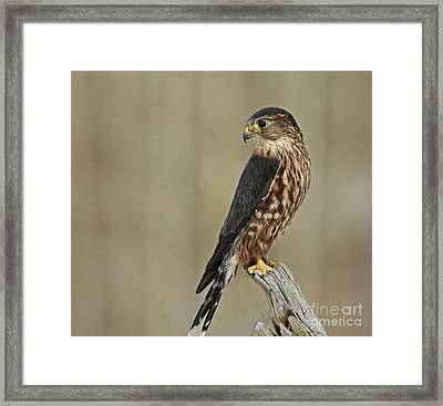 Magical Moments With Merlin Framed Print by Inspired Nature Photography Fine Art Photography