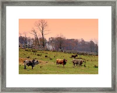 Magical Mornings Framed Print by Karen Wiles
