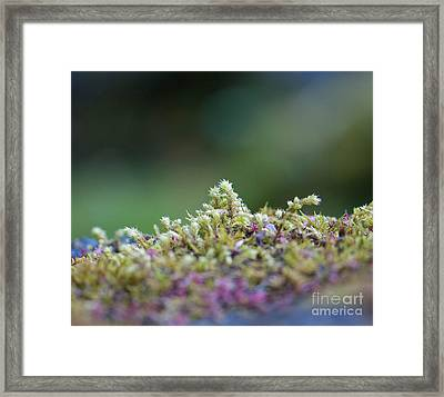 Magical Moss Framed Print by Sarah Crites