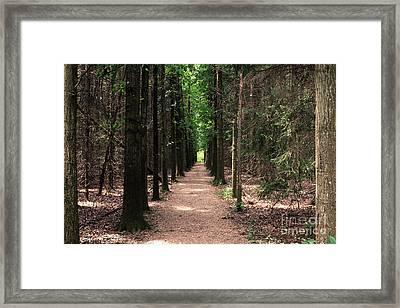 Magical Path Framed Print