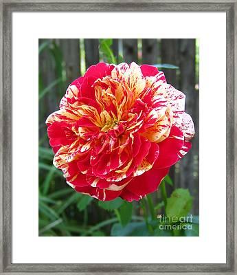 Magical Rose Framed Print