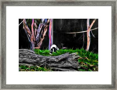 Walk In Magical Land Of The Black And White Ruffed Lemur Framed Print