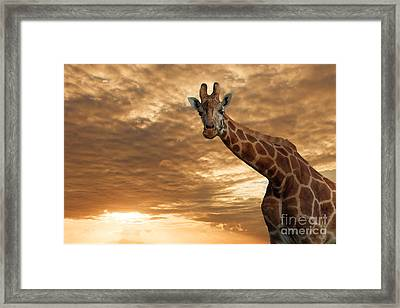 Magical Savanna Framed Print by Pete Reynolds