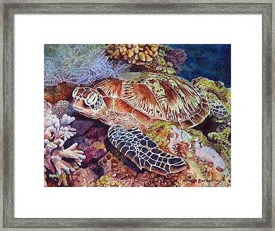 Magical Sea Turtle Framed Print by Sharon Farber