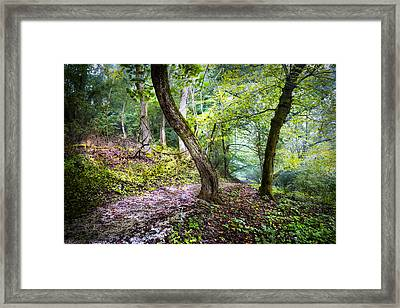 Magical Trail Framed Print by Debra and Dave Vanderlaan
