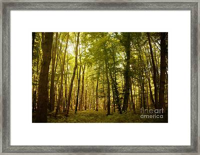 Magical Woodlands Framed Print