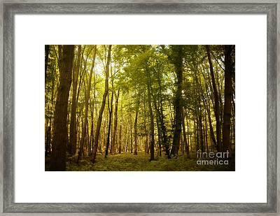 Magical Woodlands Framed Print by Ivy Ho