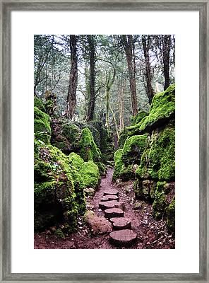 Magic's Pathway Framed Print by Tara Hall