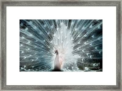 Magistic Feathers  Framed Print