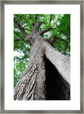 Magnific-ent Framed Print by Gail Butler