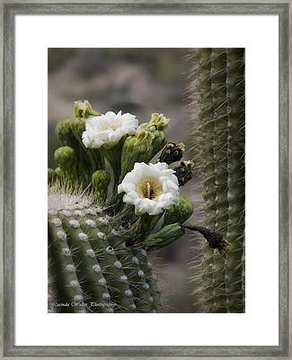 Framed Print featuring the photograph Magnificant Bloom Of The Saguaro by Lucinda Walter