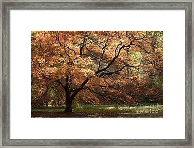 Magnificent Autumn Framed Print by Anne Gilbert