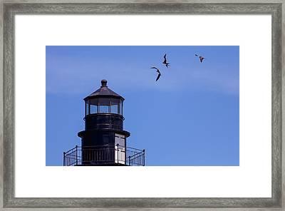 Magnificent Frigatebirds At Play Framed Print