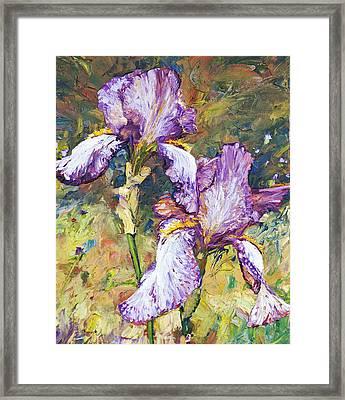 Magnificent Iris Framed Print
