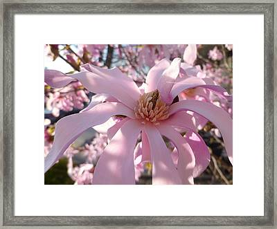 Magnificent Pink Infusion Framed Print by Lingfai Leung