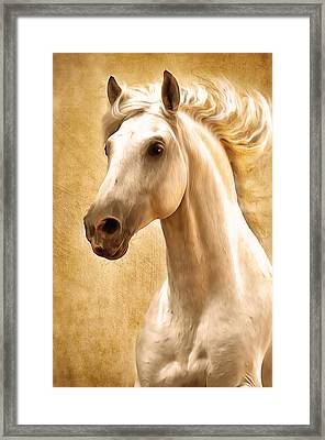 Magnificent Presence Horse Painting Framed Print by Georgiana Romanovna