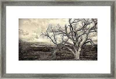 Magnificent Shoe Tree Near San Felipe Road Framed Print by Ron Regalado