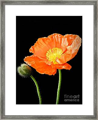 Magnificent Simplicity  Framed Print