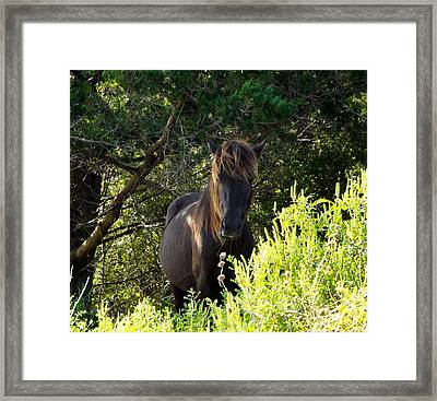 Magnificent Wild Horse Framed Print by Cindy Croal