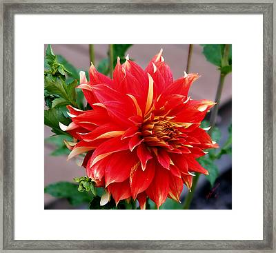 Framed Print featuring the photograph Magnifique by Jeanette C Landstrom