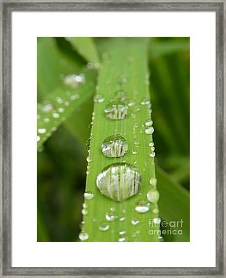 Framed Print featuring the photograph Magnifying  by Agnieszka Ledwon