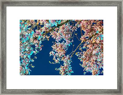 Magnolia-greenlight Framed Print