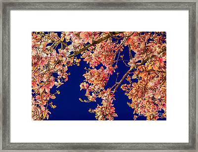 Magnolia - Redlight  Framed Print