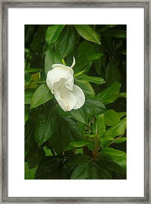 Framed Print featuring the photograph Magnolia 1 by Suzanne Powers