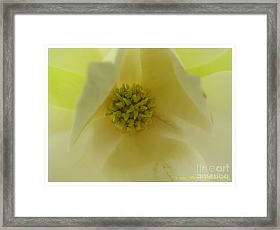 Magnolia 3 Framed Print by Mary  King