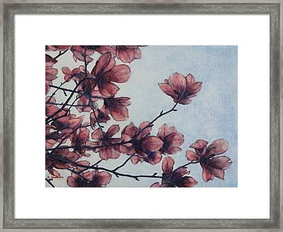 Magnolia Framed Print by Andrew Danielsen