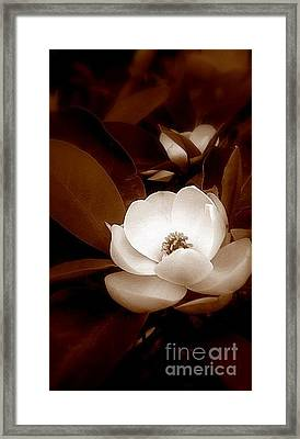 New Orleans Magnolia Beauty Framed Print