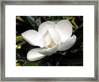 Magnolia Bloom Framed Print