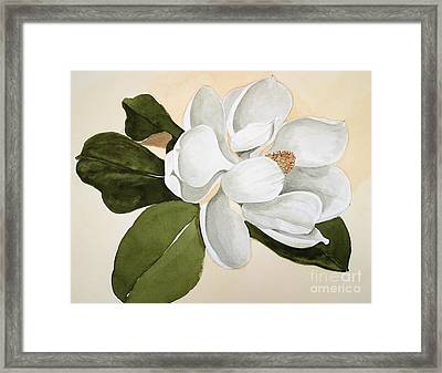 Magnolia Bloom Framed Print by Nancy Kane Chapman