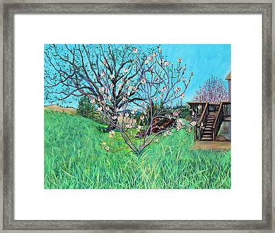 Magnolia Blooming At The Farm Framed Print