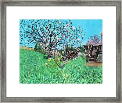 Magnolia Blooming At The Farm Framed Print by Asha Carolyn Young