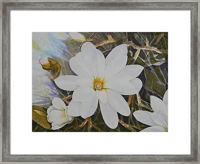 Magnolia Blossom Framed Print by Adel Nemeth
