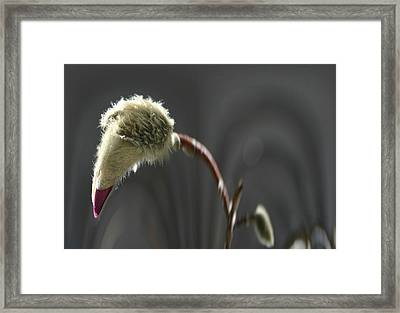 Magnolia Blossom Series 703 Framed Print