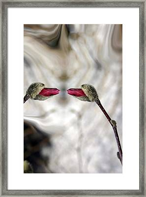Magnolia Blossom Series 705  Framed Print