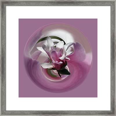 Magnolia Blossom Series 708 Framed Print