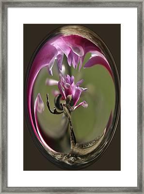 Magnolia Blossom Series 709 Framed Print