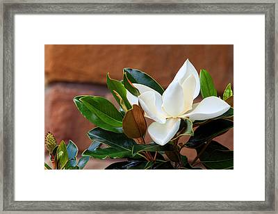 Magnolia Blossom With Bud Framed Print by Linda Phelps
