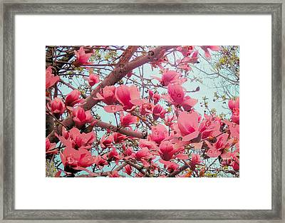 Magnolia Blossoms In Spring Framed Print by Janette Boyd
