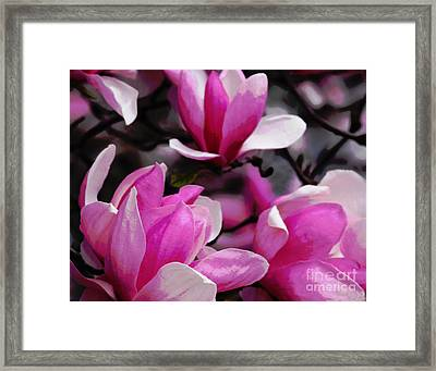 Magnolia Blossoms Framed Print by Olivia Hardwicke