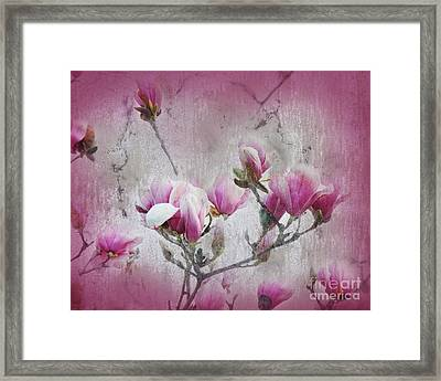 Magnolia Blossoms With Tinted Edge Framed Print by Andee Design