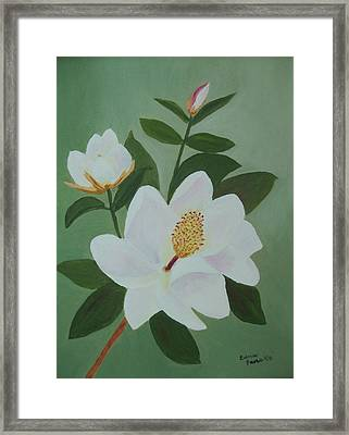 Magnolia Branch Framed Print by Edna Fenske