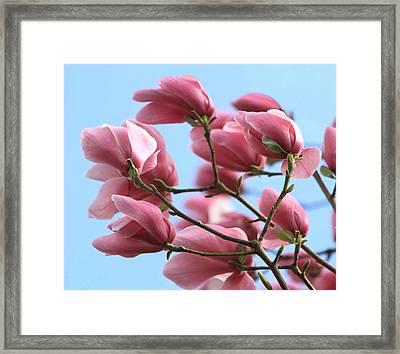 Magnolia Breeze Framed Print by Angie Vogel