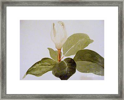 Magnolia Bud II Framed Print by Nancy Kane Chapman